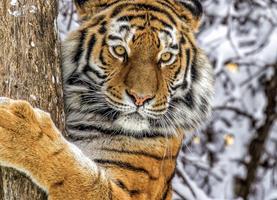 web-zoopark.ru