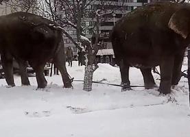 Фото: главный канал Екатеринбурга