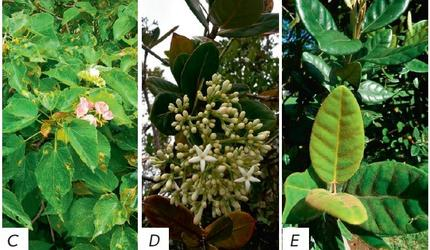 Ученые ДВФУ: Растения Маврикия обладают противоопухолевыми свойствами