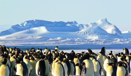 Антарктиду хотят засыпать искусственным снегом