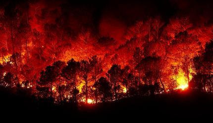 В России лес больше не горит
