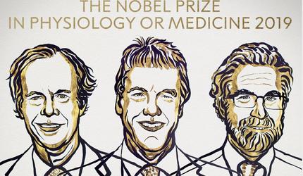 Стали известны обладатели Нобелевской премии по медицине