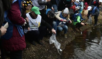 Следующей весной в Наташинские пруды повторно выпустят рыбу