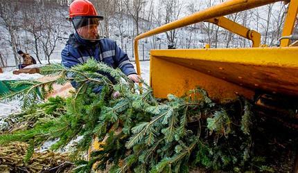 Порядка 90 кубометров новогодних елей собрали в Люберцах в рамках экоакции