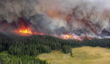 Greenpeace опасаются повторения прошлогодней ситуации с лесными пожарами