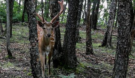 В Приморье экс-полицейских будут судить за убийство человека на охоте